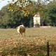 circuit GPS de rando,vtt,course à pied, Course à pied gps à Launaguet - Chemin du Poutou : La vache et le pigeonnier