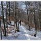 circuit GPS de rando,raquettes, But St. Genix - Col de Vassieux : Traversée de la forêt