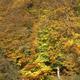 trail GPS : hike, Les Fontaines du prince et de Saint-Martin : etang ramee corcy cdt02 LefebvreBD