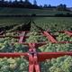 circuit GPS de cyclotourisme, Les Côtes de Troyes en Champagne : Vignoble de Montgueux