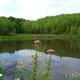 trail GPS : hike, Balade sur les terrils du Pétria à Fontaine-L'Evêque :