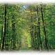 circuit GPS de vtt, Les hautes futaies de Retz à VTT : Forêt Retz Thierry