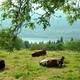 circuit GPS de rando, Sur les Pas des Huguenots  -  Laffrey - Vizille : Grand lac de Laffrey © Panoramio - Dina Steendam