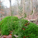 trail GPS : hike,outdoor bike, Balade en forêt à Ham-sur-Heure :
