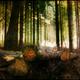 circuit GPS de rando, Boucle autour du Cluzel - Arronnes : Forêt ©gnagor Panoramio