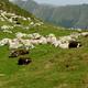 circuit GPS de rando, Tuc de Coucou - Biros : Moutons Tuc de Coucou ©flofa Panoramio