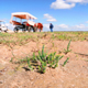 circuit GPS de rando, La dune de Royon : La dune de Royon ©B Bremer