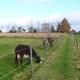 circuit GPS de rando,vtt, D'Eugies à Sars-la-Bruyère par la Forêt Domaniale de Colfontaine :
