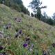 trail GPS : hike, The hill of Montenoy - Saint-Aubin-Montenoy : La montagne de Montenoy