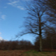 circuit GPS de rando, Promenades en forêt de Crécy 1-1 : Promenades en forêt de Crécy  ©CDT Somme