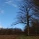 trail GPS : hike, Promenades en forêt de Crécy 1-2 : Promenades en forêt de Crécy  ©CDT Somme