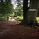 trail GPS : hike, Promenades en forêt de Crécy 2-1 : Promenades en forêt de Crécy  ©CDT Somme