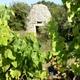 circuit GPS de vtt, Espace VTT-FFC Pays de Sommières n°1 - Le Bois de Calvisson : La culture de la vigne