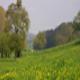 trail GPS : hike, Autour du bois de Bailleul : Autour du bois de Bailleul  ©C.Bazin_CG
