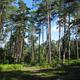 circuit GPS de rando, Chemin du Rond de Beuvron - Montfort sur Risle : La forêt domaniale est  surtout composée de résineux: un paysage inattendu en Normandie