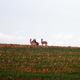 circuit GPS de rando, Au sud de Saulces-Monclin  : Vue éphémère