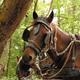 circuit GPS de cheval, Boucle de Mont de l'Enclus : e201