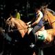 circuit GPS de cheval, Boucle de Flobecq : e205