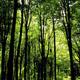 trail GPS : hike, Entre Kwaremont et Amougies : pt2