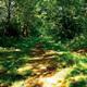 trail GPS : hike, Balade des Roctiers d'Allain : p311