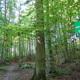 circuit GPS de rando, Balade en Forêt de Soignes :