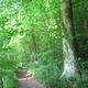 circuit GPS de rando,vtt, Chemin du Val Dallet - Brestot    : Beaucoup de beaux arbres de haut jet en forêt domaniale