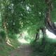 circuit GPS de rando,vtt, Chemin du Val Dallet - Brestot    : Le bocahe des chemins creux très présents sur les vallons et le plateau