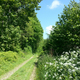 circuit GPS de rando,vtt, Chemin du Val Dallet - Brestot    : Un vallon entre forêt et bocage