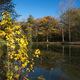 circuit GPS de rando, Forêt de Signy-l'Abbaye - Signy-l'Abbaye : Etang de la héronnière