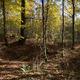 circuit GPS de rando, Forêt de Signy-l'Abbaye - Signy-l'Abbaye : Hêtraie