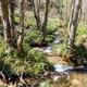 circuit GPS de vtt, Viaduc des Peux et Col du Beaulouis (circuit long) - La Loge des Gardes : 4_Ruisseau de l'Étui