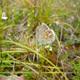 trail GPS : hike, Boucle de Ravary - Cenac-et-Saint-Julien : azure des genets  © perigordnoir-valleedordogne