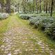 trail GPS : outdoor bike, Un tour en forêt d'Ermenonville  : Chemin pavé © Tin Image - Panoramio