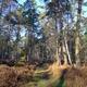 trail GPS : outdoor bike, Un tour en forêt d'Ermenonville  : © Gérard Laurent (Road Runner) - Panoramio