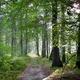 trail GPS : outdoor bike, Un tour en forêt d'Ermenonville  : © P.poschadel - Wikipédia