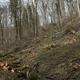 trail GPS : hike, Les combes de Joinville : Coupe de bois de chauffage en bordure de sentier