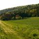 circuit GPS de rando, Circuit du Bois de Gravelon - Longchamp-sur-Aujon : © longchamp-sur-Aujon.fr