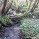 circuit GPS de rando, Autour de Saint Divy par la forêt de Landerneau :