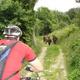 circuit GPS de vtt, Boucle autour de Oytier St Oblas : Au km 31, en compagnie d'un troupeau d'anes