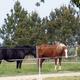circuit GPS de cheval, Boucle à Vallères : ©Mairie de Vallères