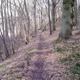 trail GPS : hike, Promenade dans le Bois Jacques :