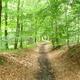 trail GPS : hike,outdoor bike, Promenade à Soye par bois et champs :