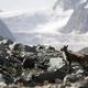 trail GPS : hike, Le Grand Tour de la Grande Motte : Glacier Vanoise © jfmdenice -