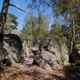 trail GPS : hike,running, The 25 humps in Fontainebleau forest :